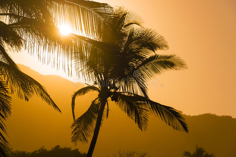 Palmsilhouetten stock foto