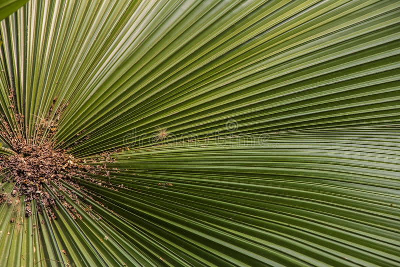 Palmsonntags-Blatt 2 lizenzfreie stockfotografie