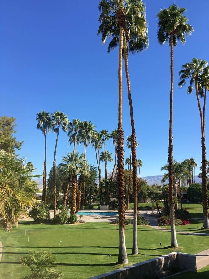 Palmstad stock afbeeldingen