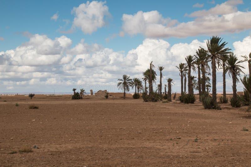 Palmsteeg, Marokko stock afbeeldingen
