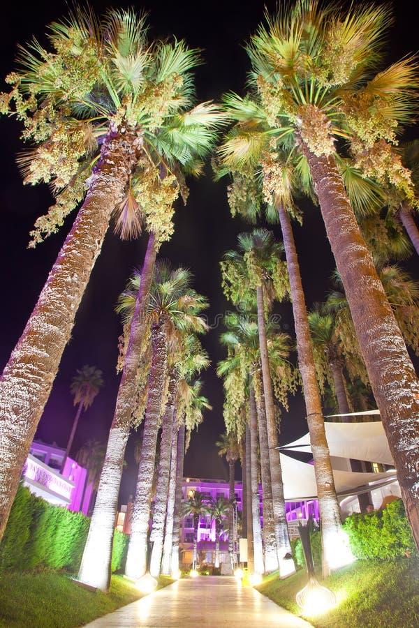 Palmsteeg met nachtverlichting op het hotel van het grondgebied stock fotografie