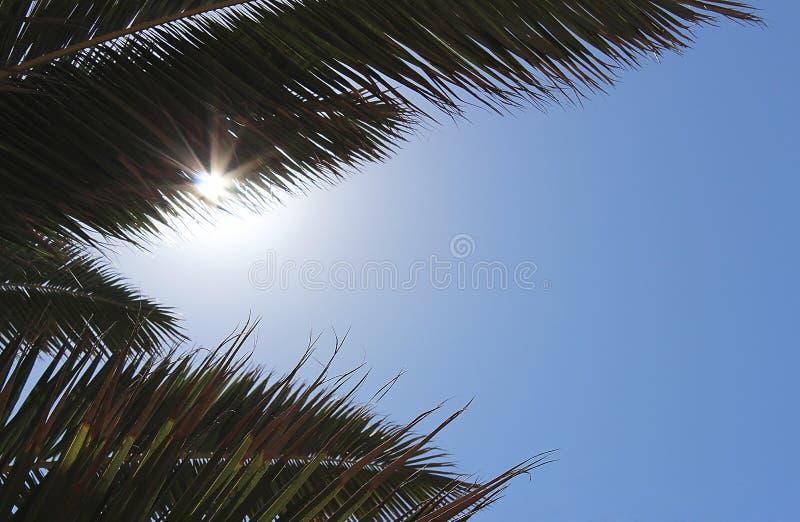 Palmtak en hemel op zonneschijndag royalty-vrije stock afbeeldingen