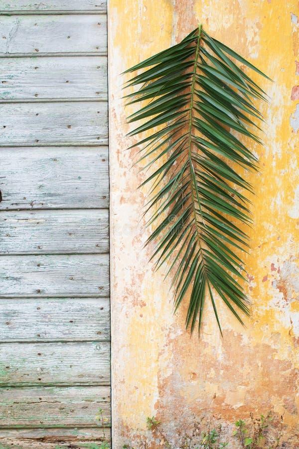Palmtak het hangen op een oude uitstekende muur en houten deur als P royalty-vrije stock afbeelding