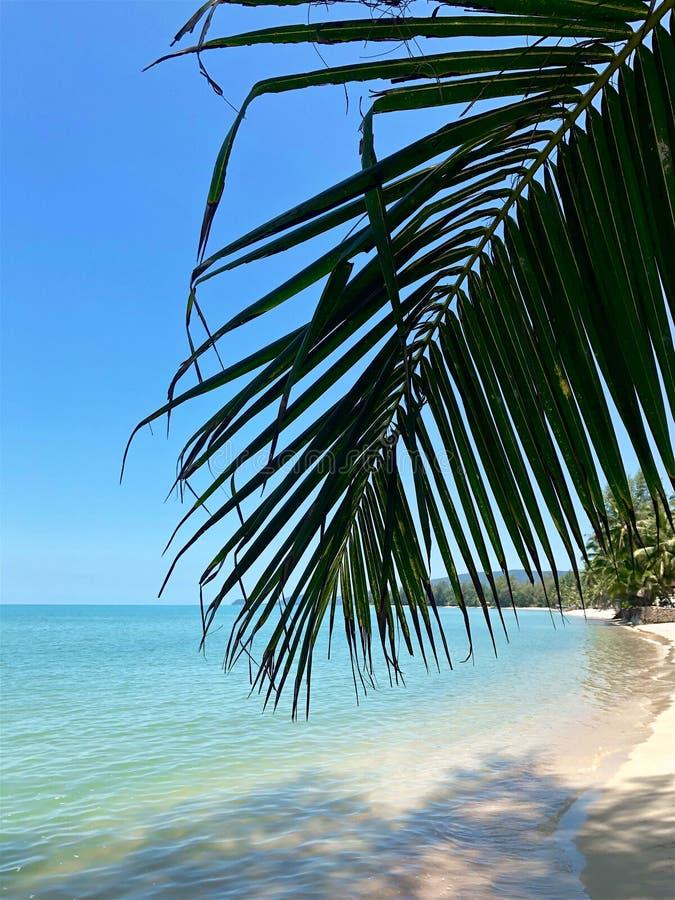 Palmtak op de achtergrond van een tropisch strand stock foto's