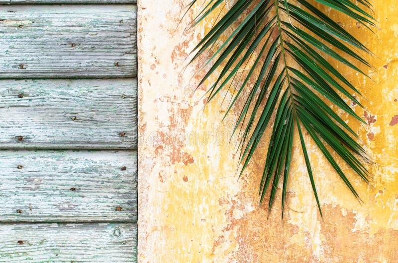 Palmtak op een oude uitstekende muur en een houten deur van historisch royalty-vrije stock foto