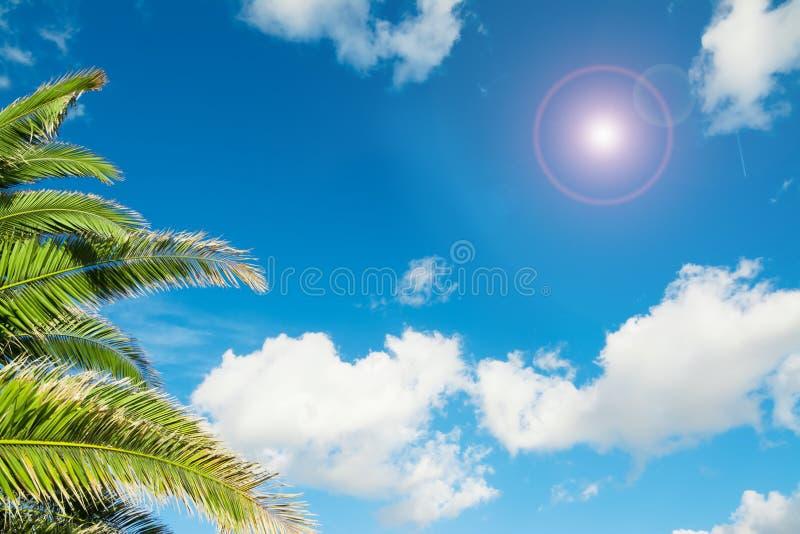 Download Palmtakken Onder Een Blauwe Hemel Stock Foto - Afbeelding bestaande uit summer, blauw: 54077820