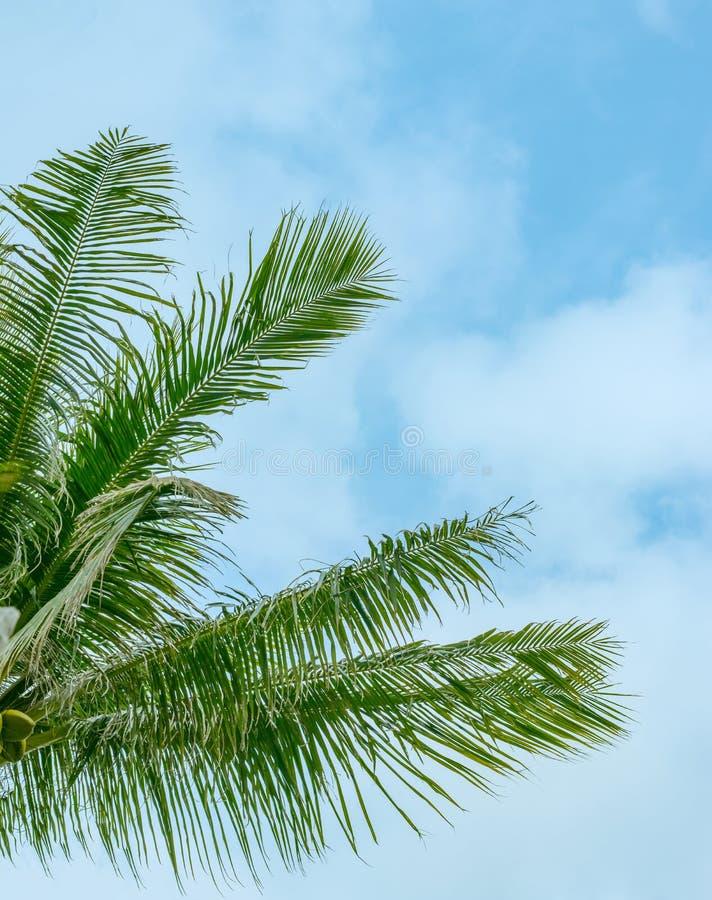 Palmtakken tegen de hemel royalty-vrije stock foto