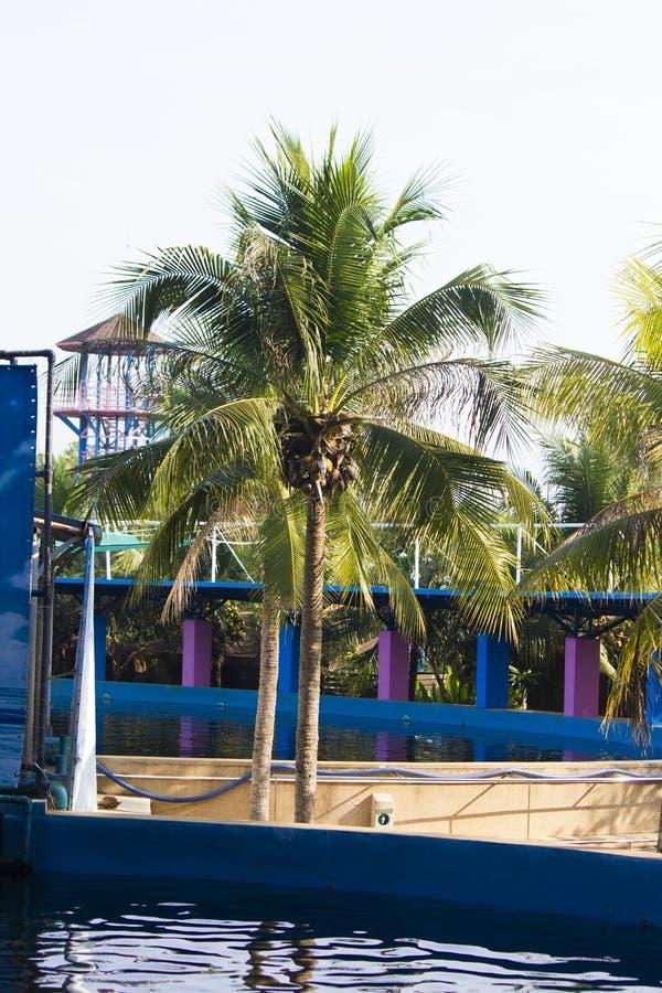 Palmträd över pölen royaltyfria foton