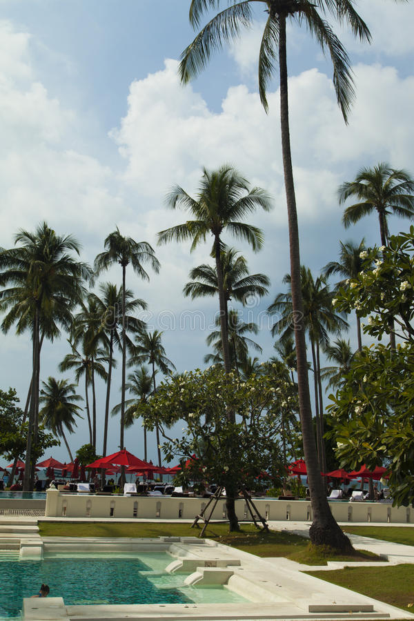 Palmträd över pölen arkivbild