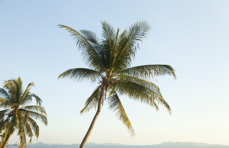 Palmträd ashore arkivfoto