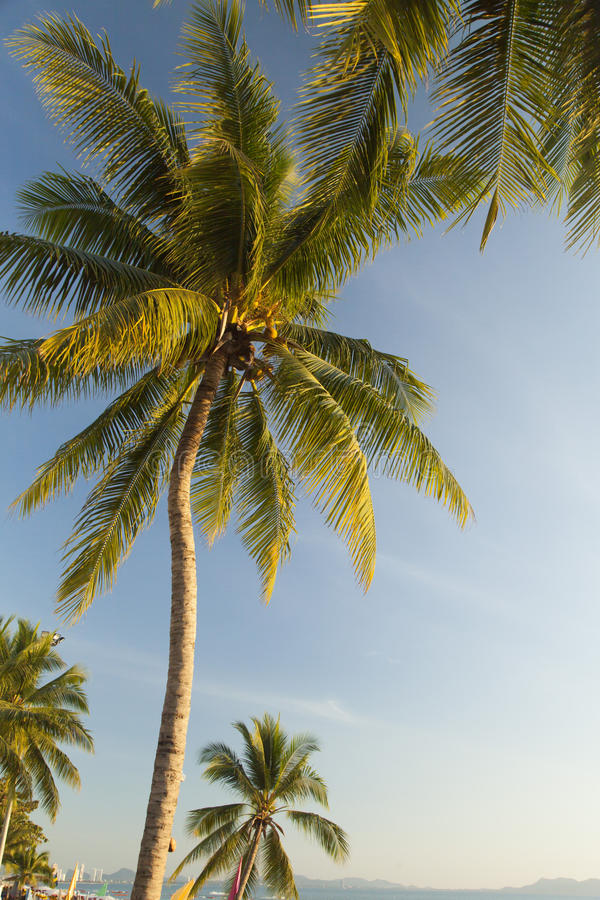 Palmträd ashore arkivbilder