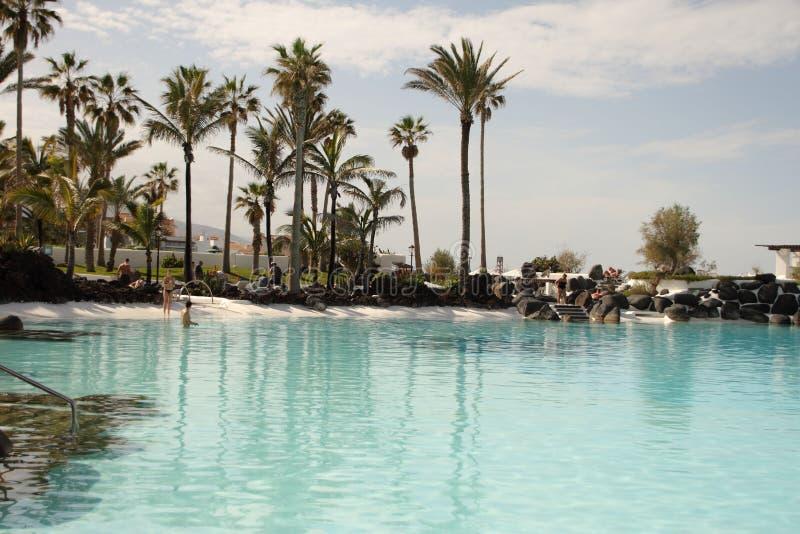 Palmträd av den Tenerife ön arkivfoto