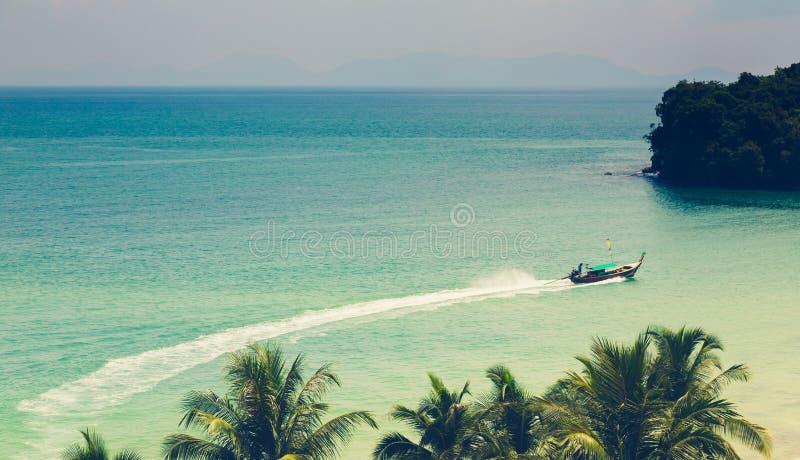 Palmträd (bearbetad filtrerad bild) fotografering för bildbyråer