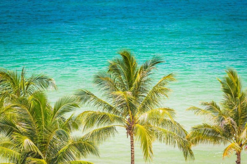Palmträd (den filtrerade bilden bearbetade VI arkivbilder