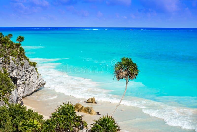 Palmträd för Tulum turkosstrand i Riviera Maya på Mayan arkivfoton
