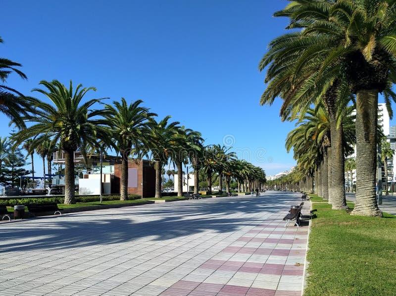 Palmträd fodrad promenad av Salou, Spanien arkivbild
