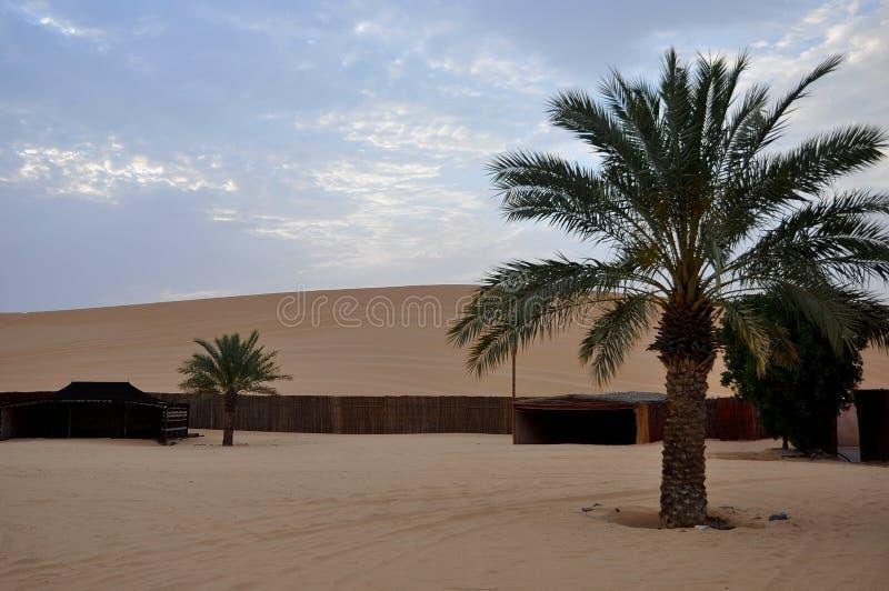 Palmträd i öken fotografering för bildbyråer