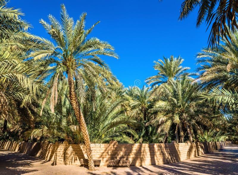 Palmträd i Al Ain Oasis fotografering för bildbyråer