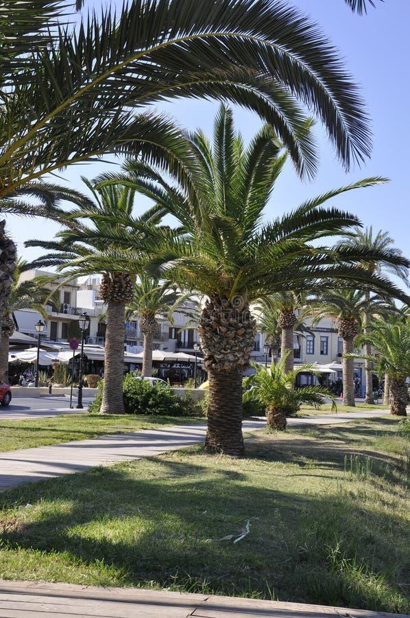 Palmträd i allmänheten parkerar trädgården från den Rethymno staden av Kreta i Grekland royaltyfri bild