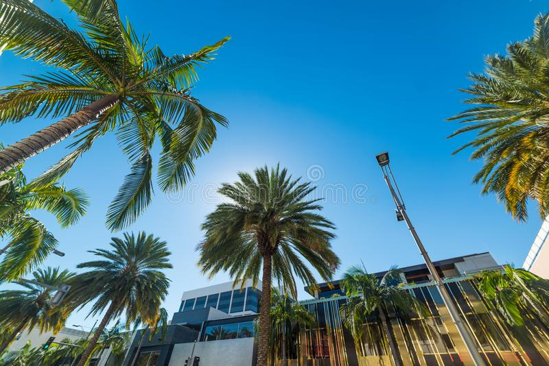 Palmträd i Beverly Hills arkivfoton