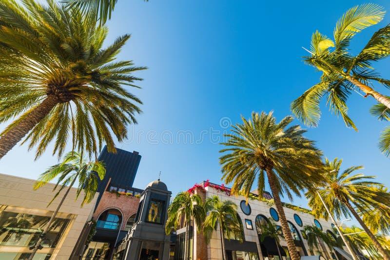 Palmträd i Beverly Hills arkivbild