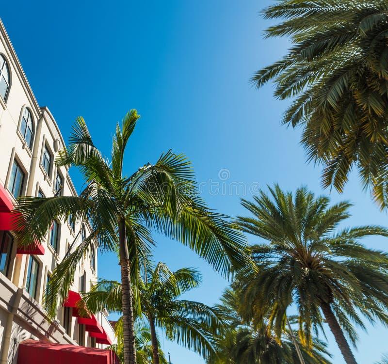Palmträd i Beverly Hills royaltyfria bilder