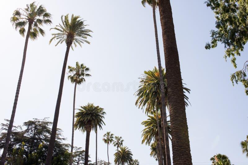 Palmträd i Beverly Hills royaltyfria foton