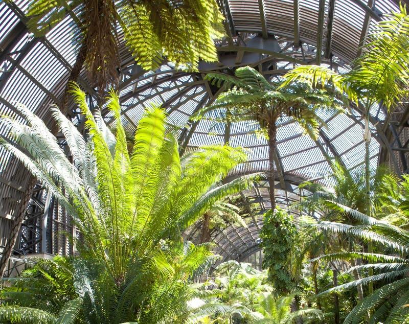Palmträd i botanisk byggnad, Balboa parkerar arkivbild