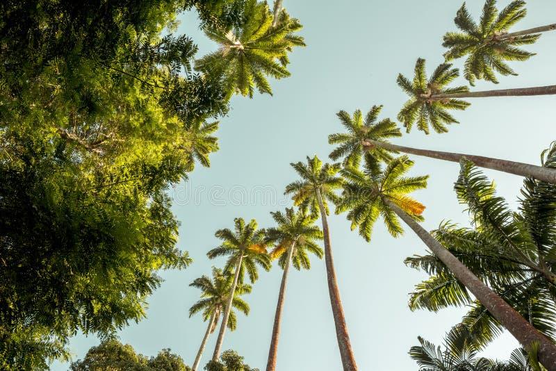 Palmträd i botanisk trädgård i Rio de Janeiro, Brasilien royaltyfri fotografi