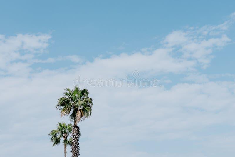 Palmträd i en sommardag royaltyfri foto