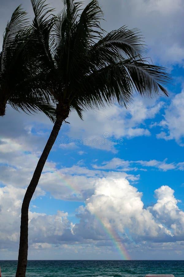 Palmträd i en strand med blå himmel och en regnbåge royaltyfria bilder