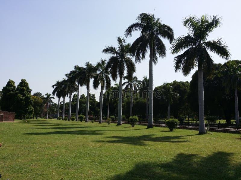 Palmträd i gränd fotografering för bildbyråer