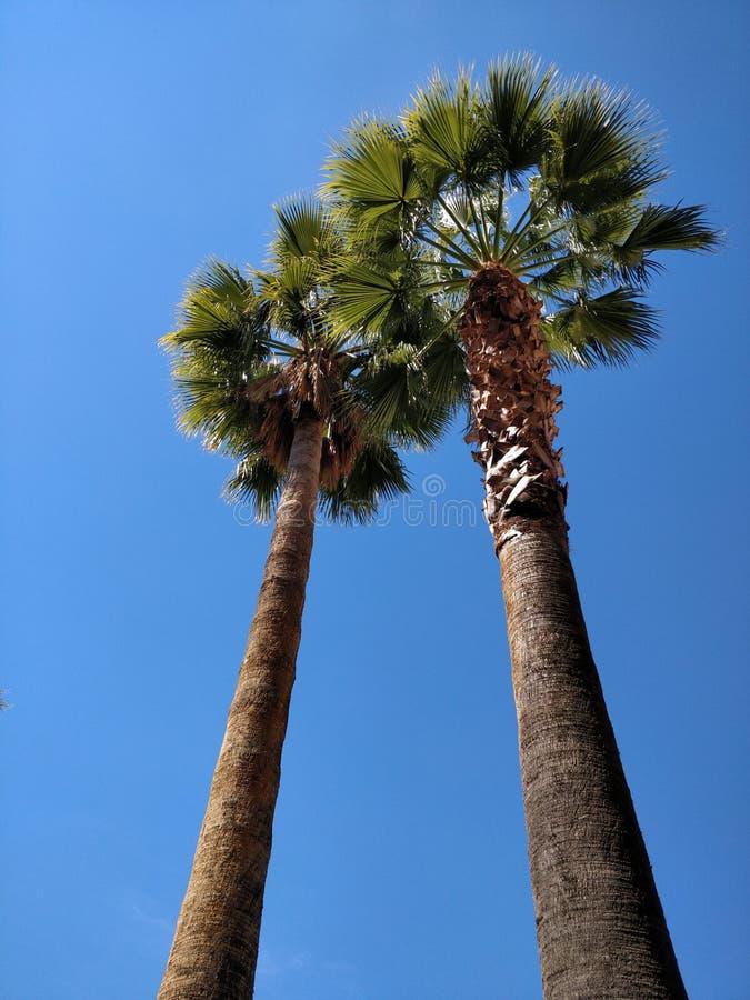 Palmträd i Granada arkivfoto