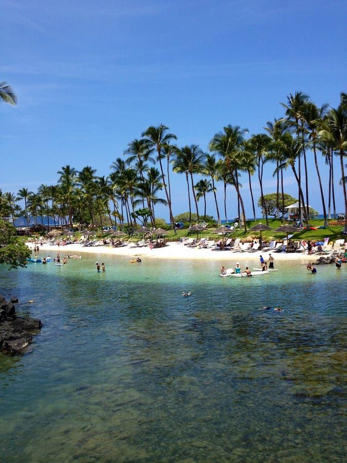 Palmträd i Hawaii royaltyfria bilder