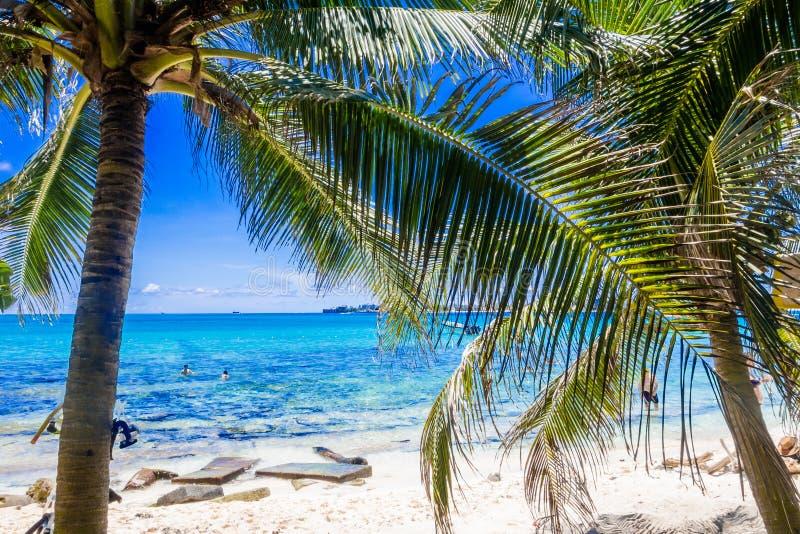 Palmträd i Johnny Cay, ö av San Andres, Colombia i en härlig strandbakgrund arkivbilder