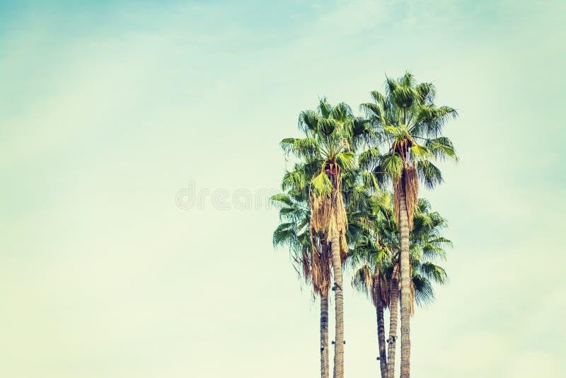 Palmträd i Los Angeles i tappningsignal royaltyfri fotografi