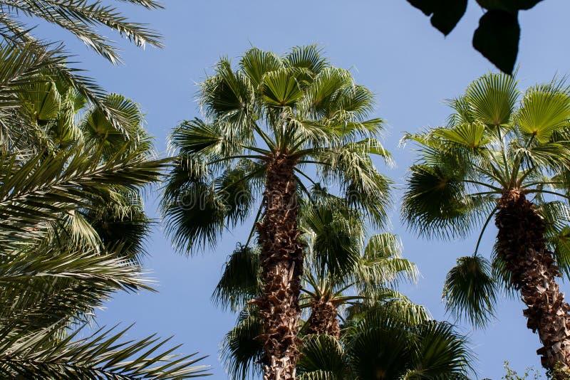 Palmträd i Maroc royaltyfria foton