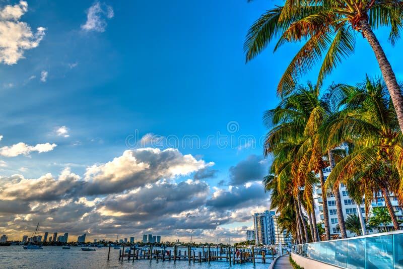 Palmträd i Miami Beach bayfront på solnedgången arkivbild