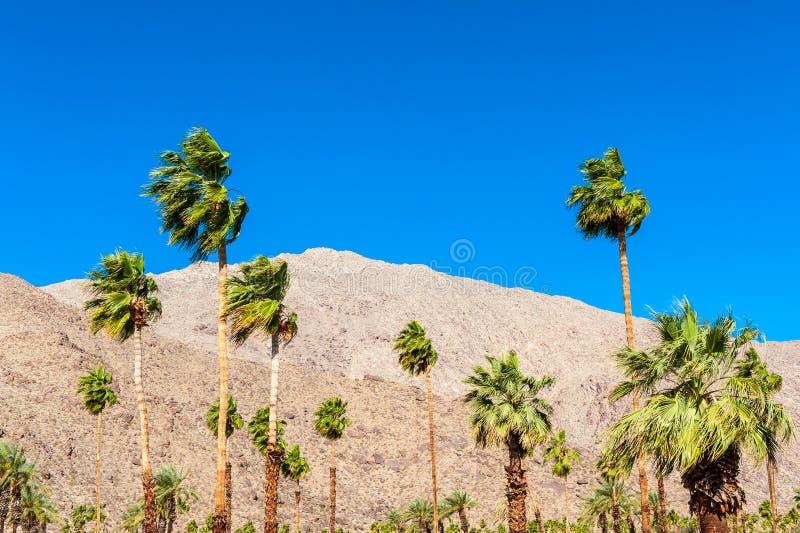 Palmträd i Palm Springs CA royaltyfri fotografi