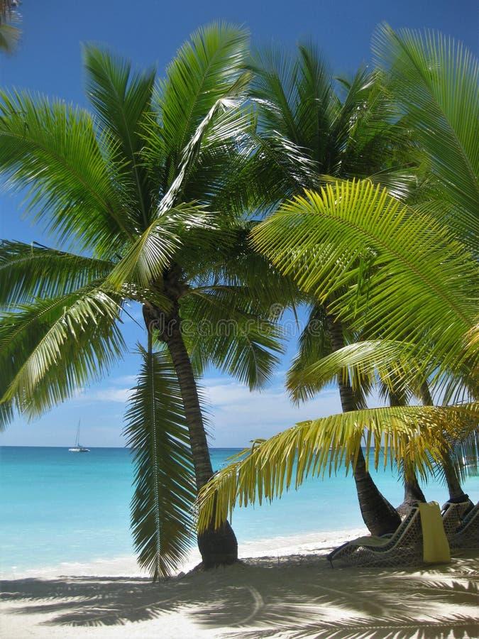 Palmträd i paradisön med vit sand arkivfoton