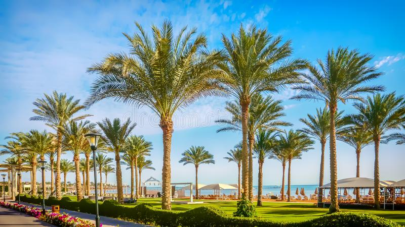 Palmträd i parkera på invallningen nära det blåa havet arkivfoton