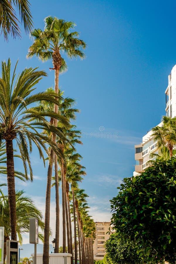 Palmträd i rad mot bakgrund för blå himmel royaltyfri fotografi