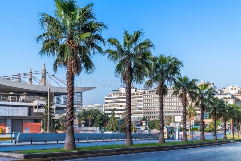 Palmträd i raden royaltyfri fotografi