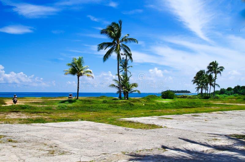 Palmträd i San Andres, Colombia i en härlig strandbakgrund fotografering för bildbyråer