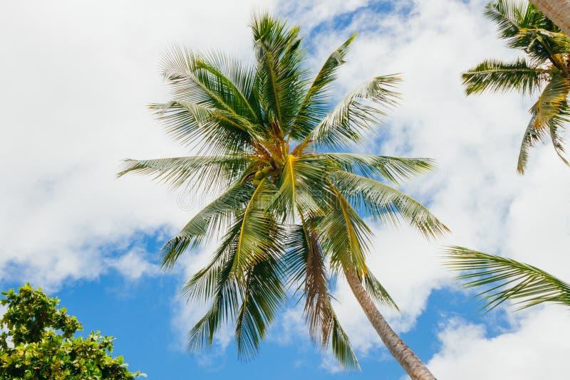 Palmträd i Seychellerna fotografering för bildbyråer