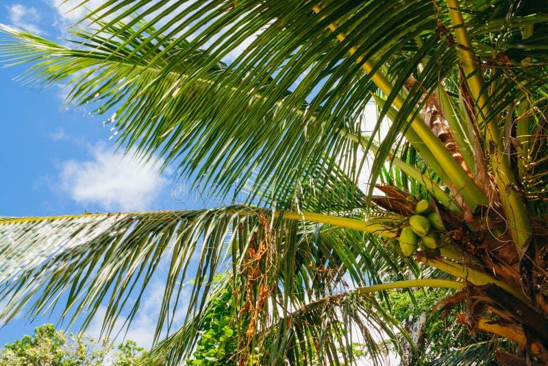 Palmträd i Seychellerna royaltyfri bild