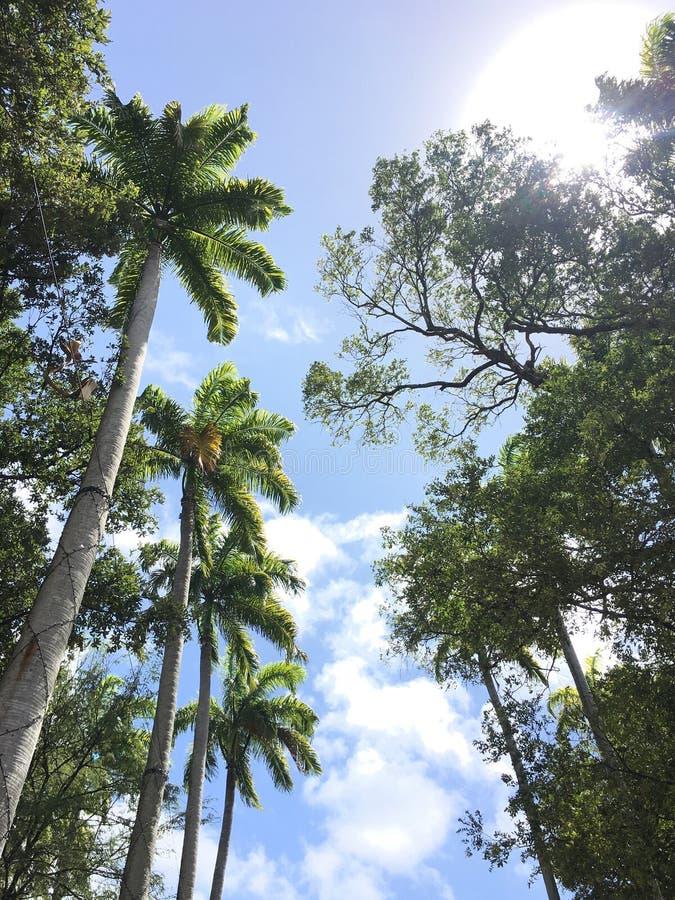 Palmträd i skogen royaltyfria bilder