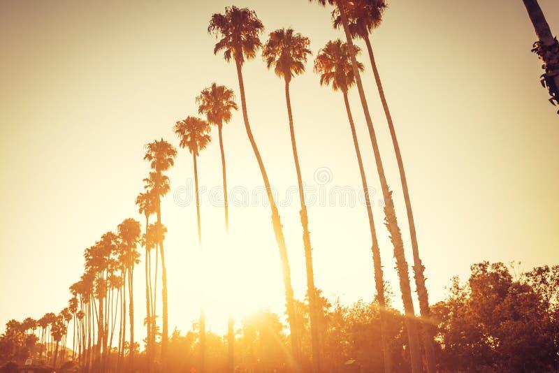 Palmträd i solnedgång i Santa Barbara royaltyfria bilder