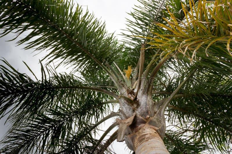 Palmträd i sommar i staden av federation, landskap av entrerios Argentina royaltyfria foton