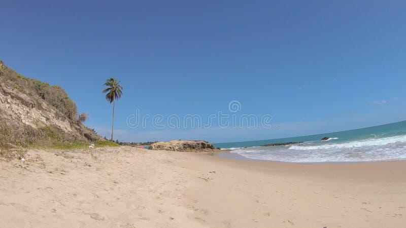 Palmträd i strand av Jacumã-PB arkivfoton